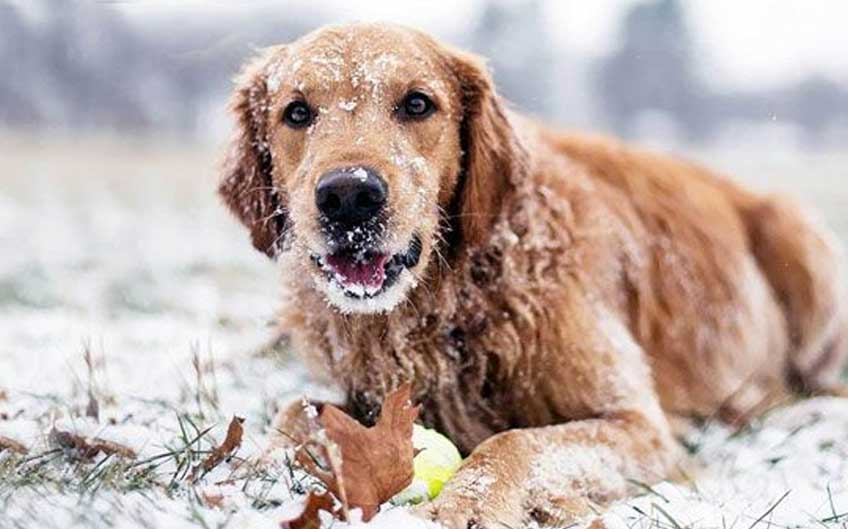 How Can I Protect My Dog In Cold Weather?