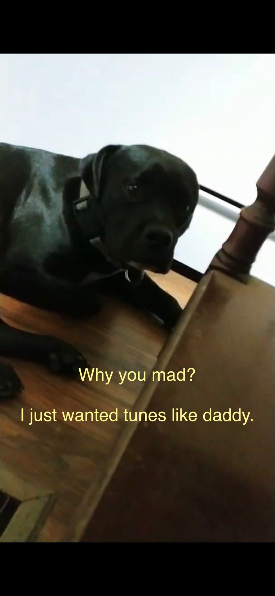 Dog who chewed vinyl records