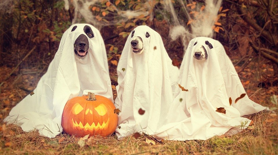 Dogs in ghost costume