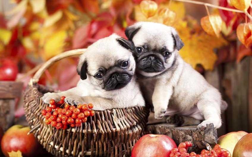 Holiday Treats Pets Should Avoid Eating