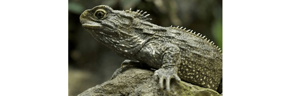 Interesting Facts about Reptiles & Amphibians