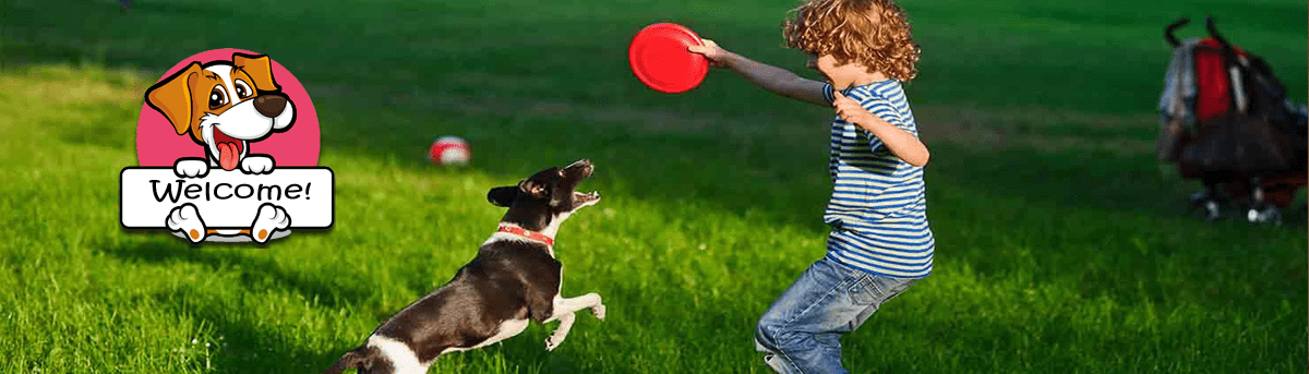 dog catches a frisbee