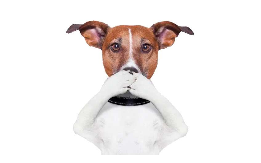 Dog Dental Disease