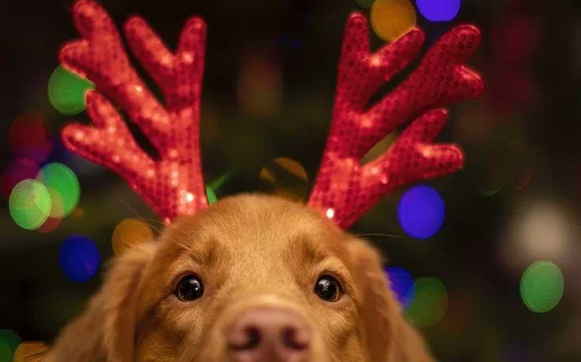 Healthy Gifts for Dogs