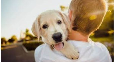 Dog being held by a child