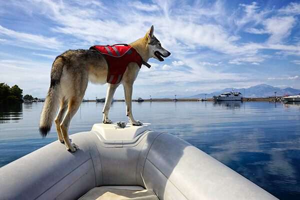 Dog-on-a-boat